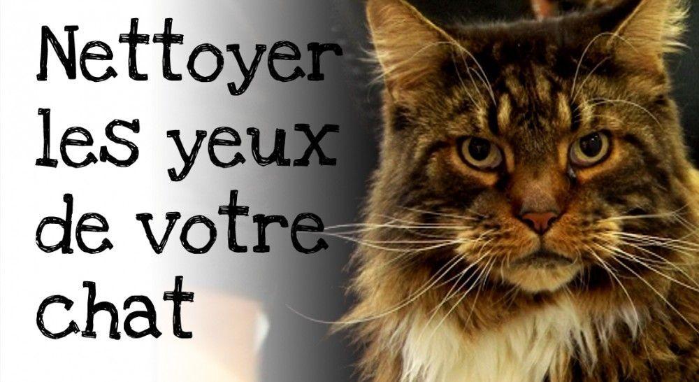 Comment nettoyer les yeux de votre chat ?