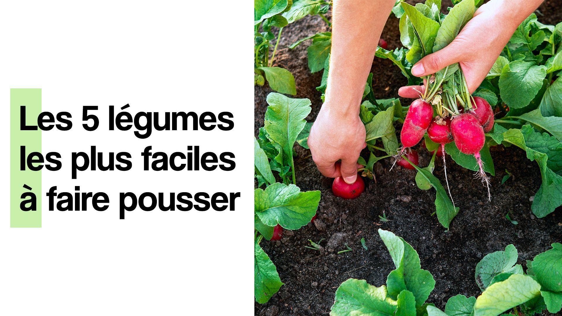 Les 5 légumes les plus faciles à faire pousser