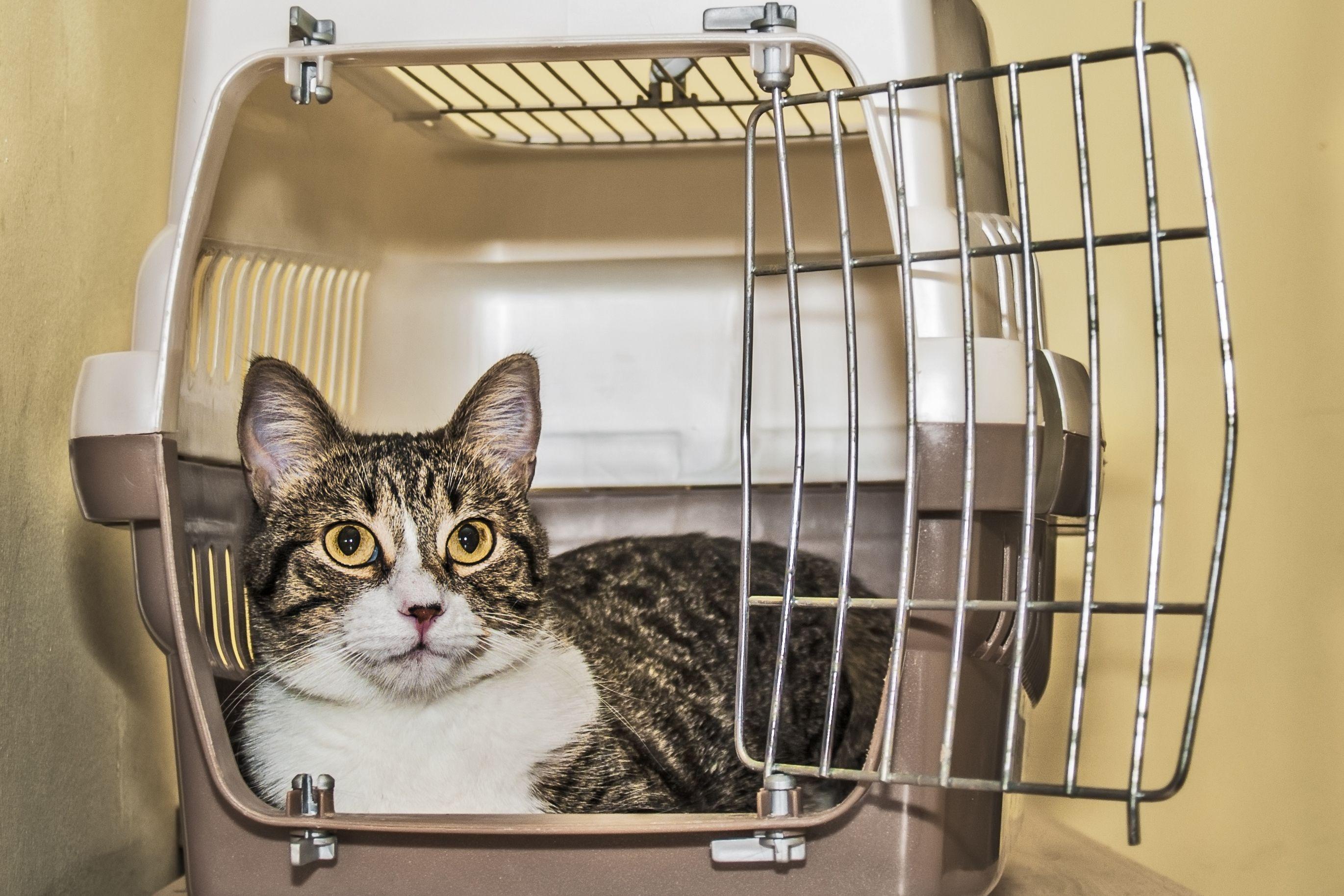 Cage pour chat ou sac de transport   que choisir   - Doctissimo 4049a8653f7a