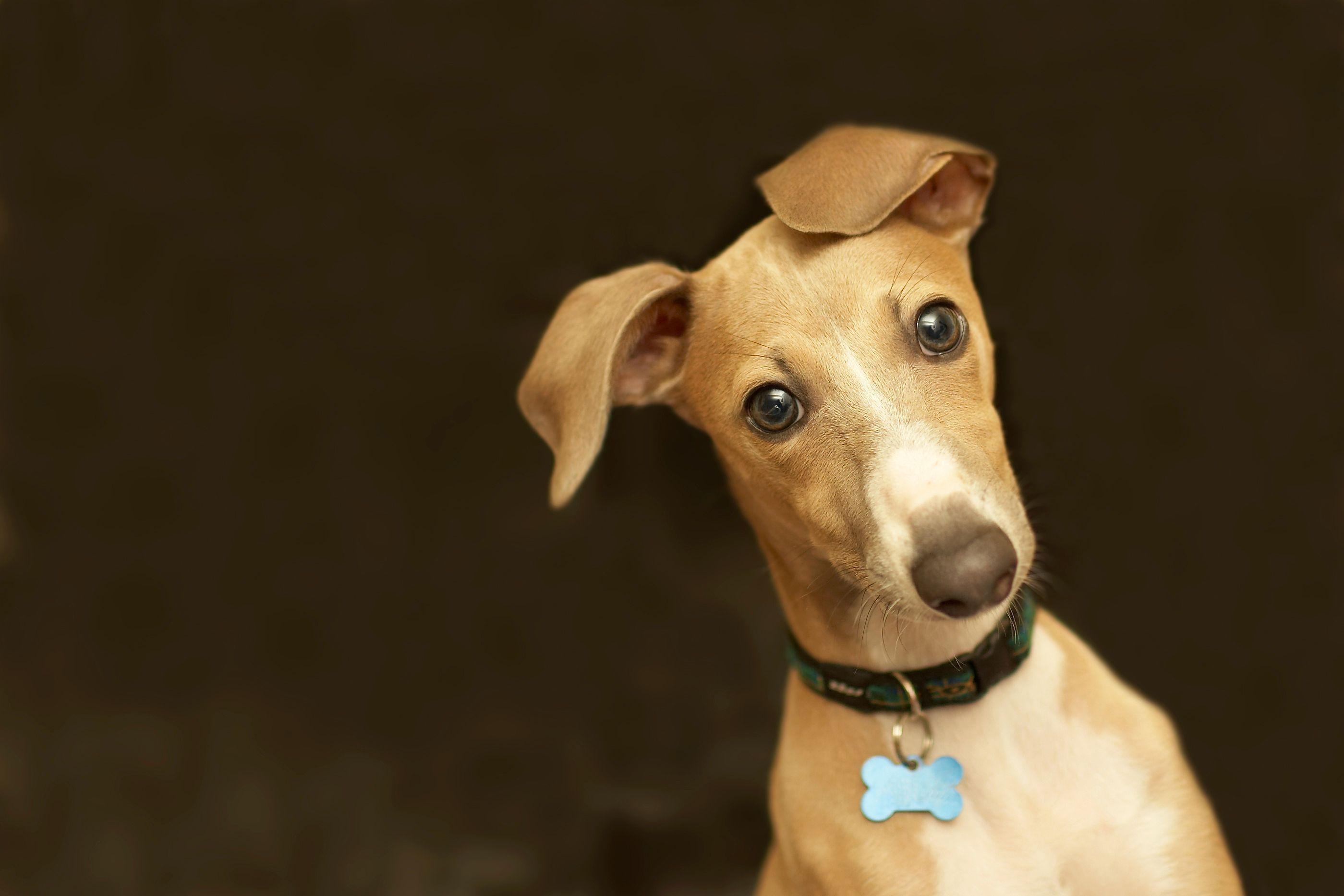 design exquis style exquis bonne vente de chaussures Les colliers et les médailles d'identité pour mon chien ...
