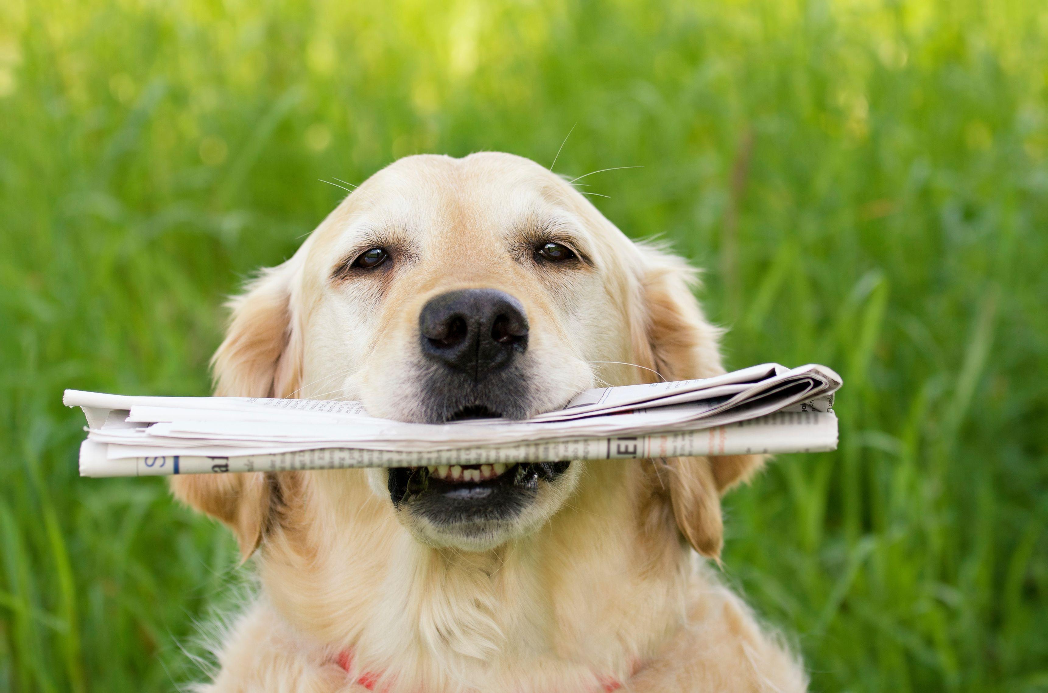 apprendre à son chien à chercher