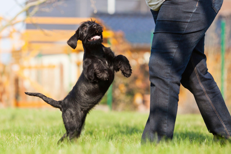 dresser son chien pour ne pas sauter