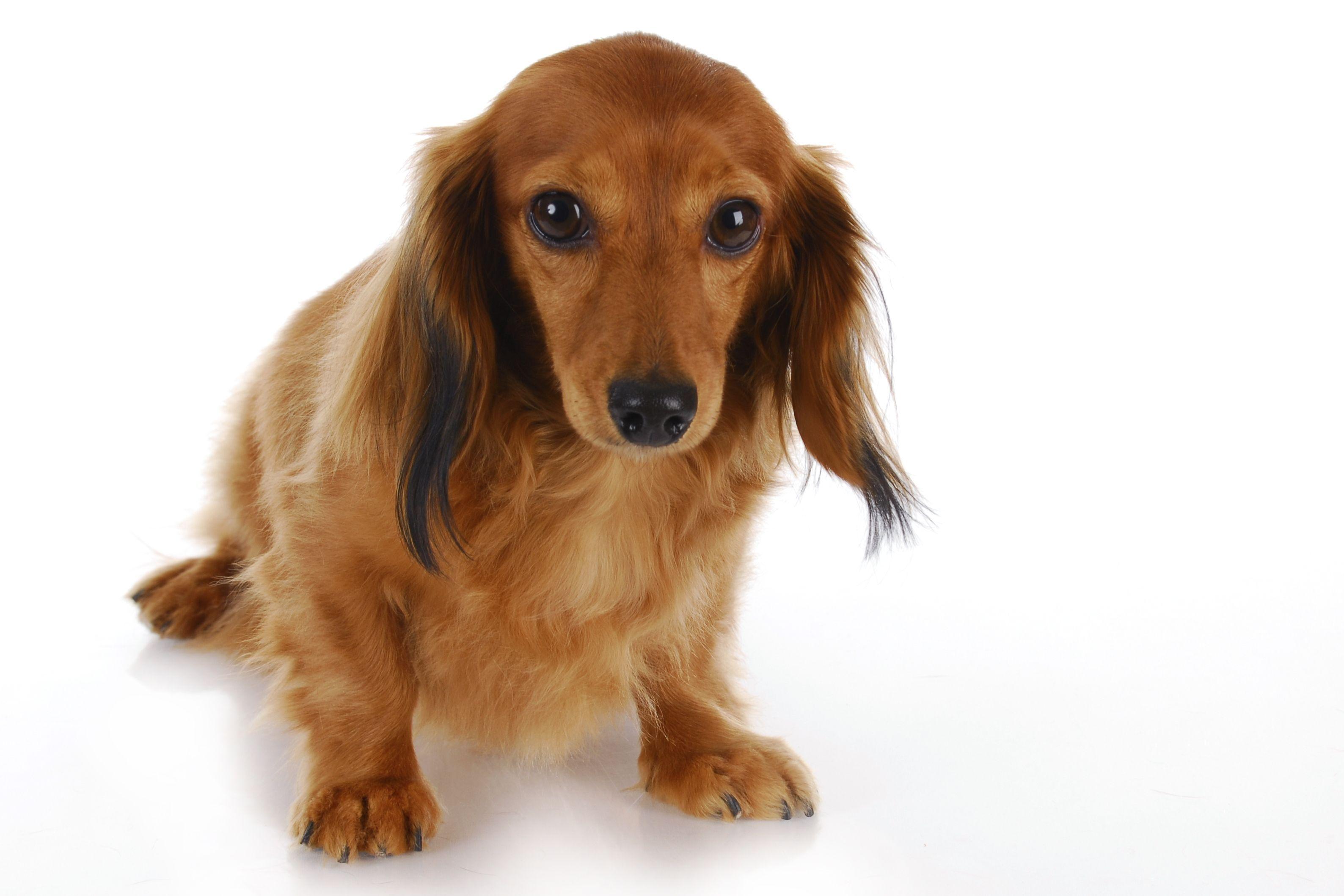 Mon chien a mal au ventre - Mon chien a des gaz - Doctissimo