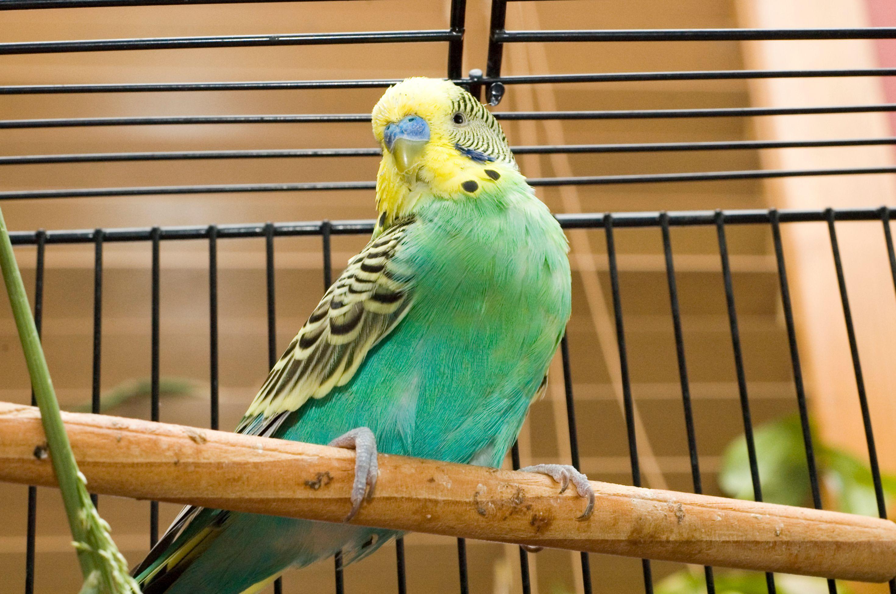 Image result for Les critères pour choisir une bonne baignoire pour oiseau