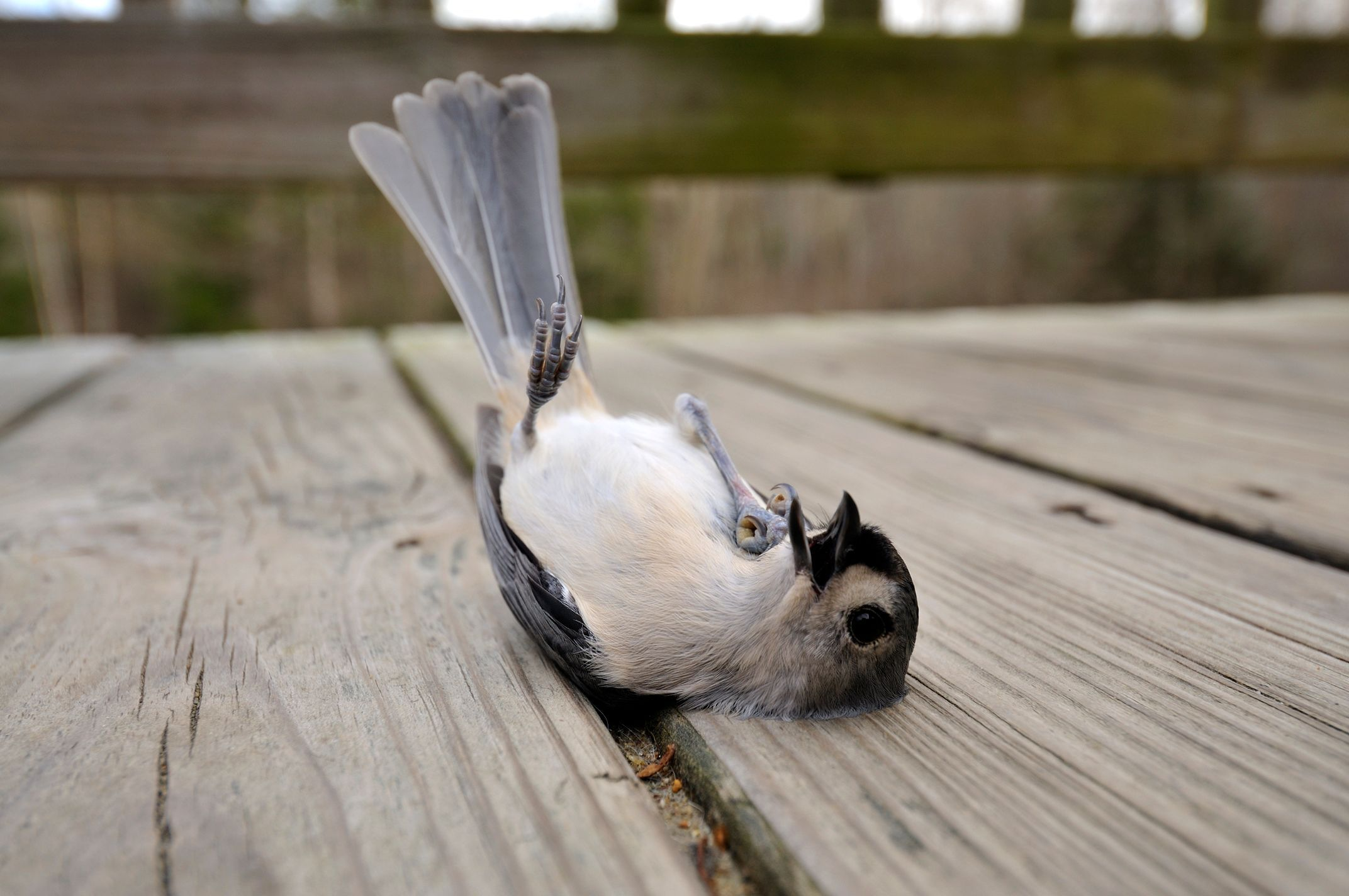 État de choc chez l'oiseau - Doctissimo