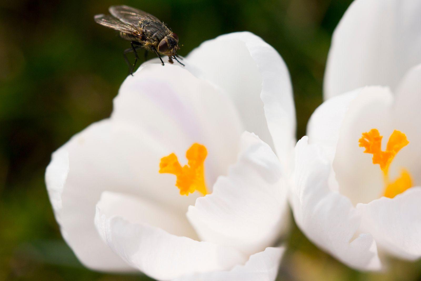 Remede De Grand Mere Contre Les Moucherons Dans La Maison se débarrasser des mouches et moucherons