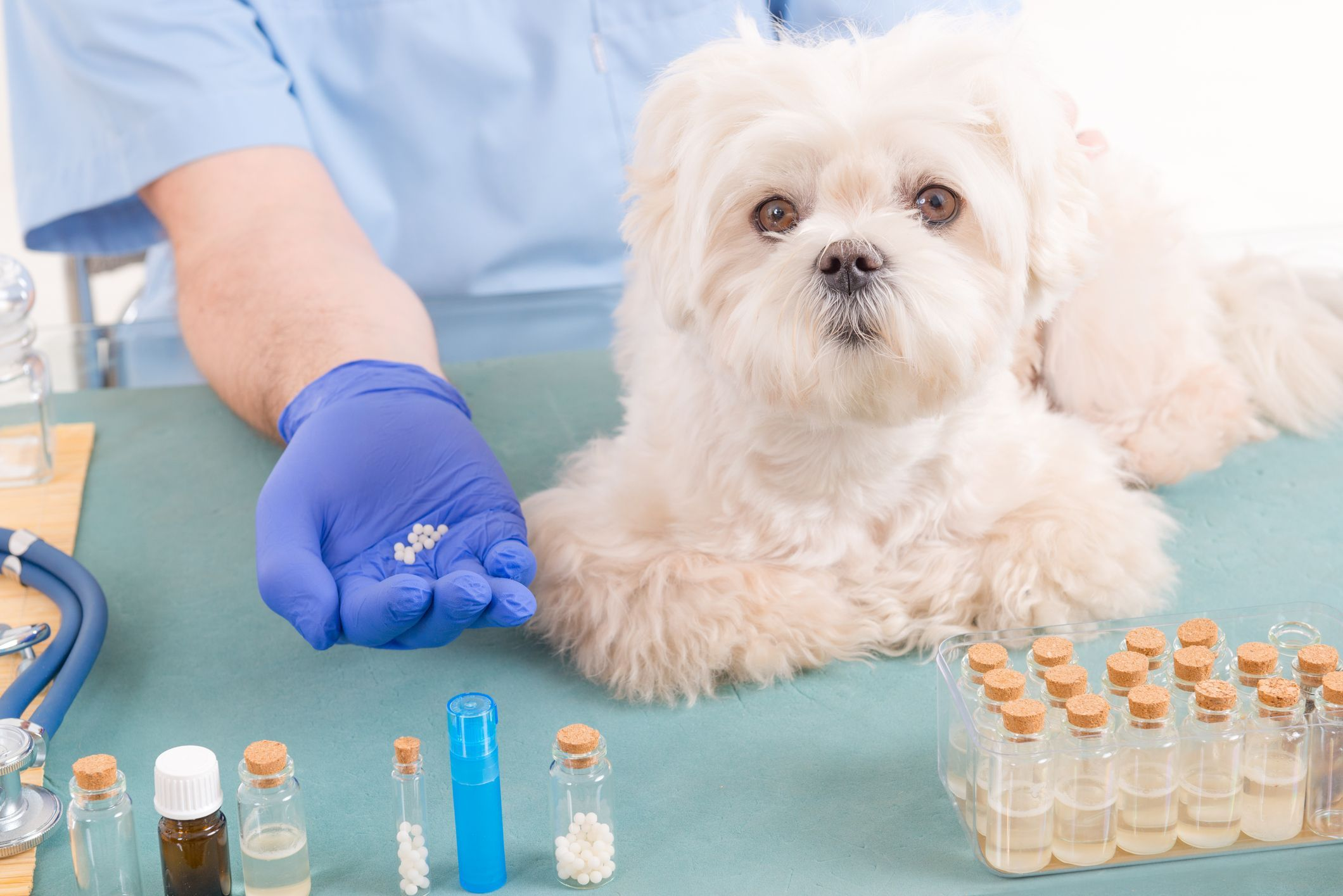 Homéopathie pour mon chien - Doctissimo