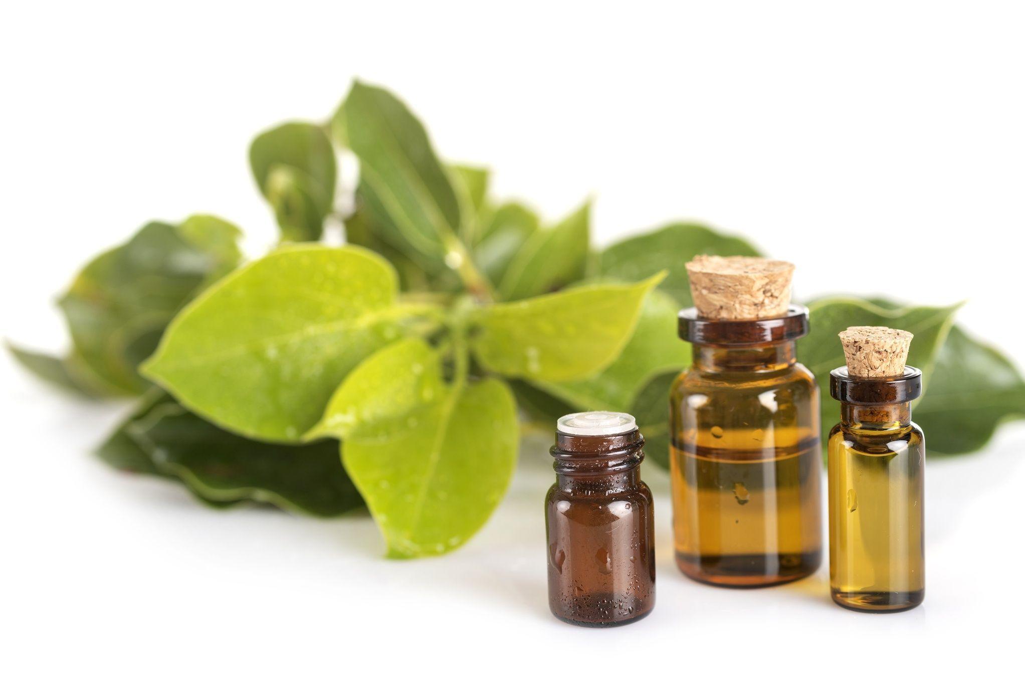 Huiles Essentielles Contre Les Souris comment utiliser l'huile essentielle de ravintsara ?