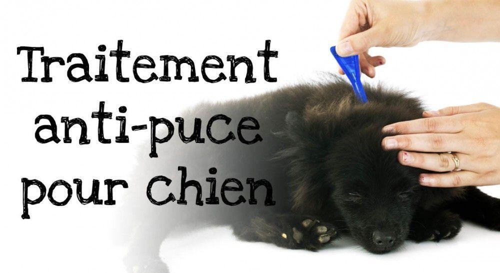 anti puce chien appliquer traitement anti puces pour chien. Black Bedroom Furniture Sets. Home Design Ideas