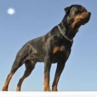 test chien de garde