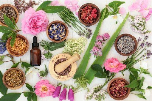 Cystite et phytothérapie