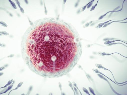 don-spermatozoide-wd-510