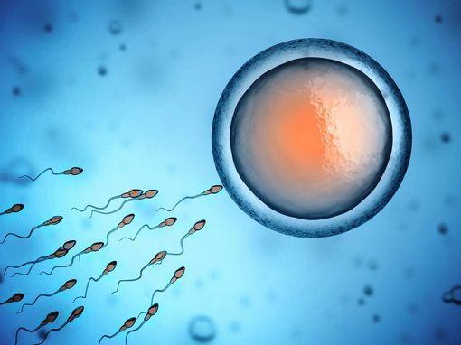 efficacite-contraception-wd-510