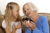 accueillir un rat domestique