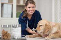 aliments prescrits par le vétérinaire