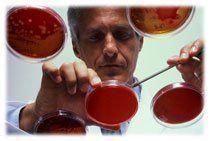 analyse-bacterio