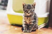 apprendre la propreté à un chat