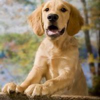 barrières pour chien