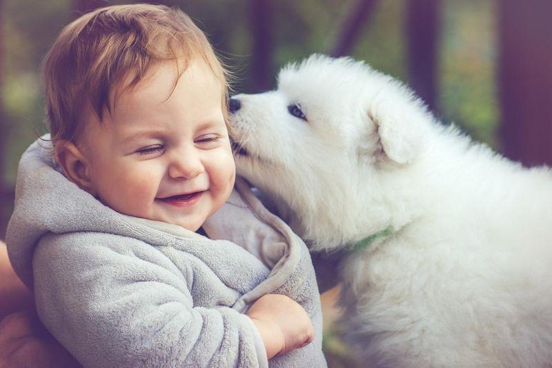 Bébé et les animaux