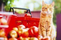 besoin en vitamines du chat
