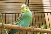 cage oiseau