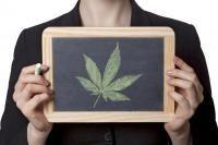 cannabis allergie