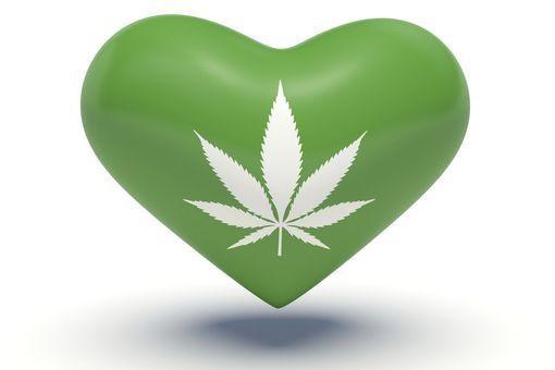 cannabis coeur cholestérol