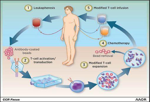cellules car-t