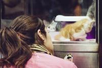 chat en animalerie