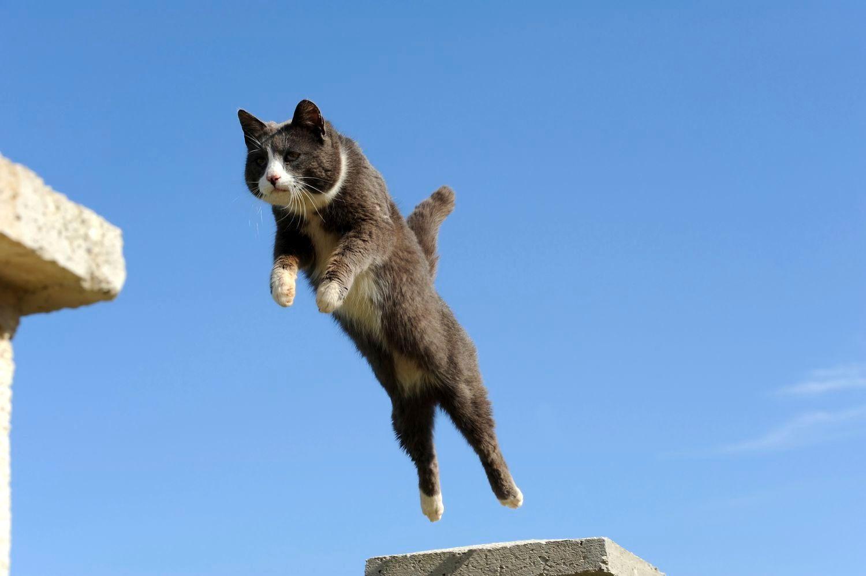 chat retombe sur ses pattes