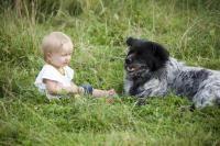 chien à la campagne