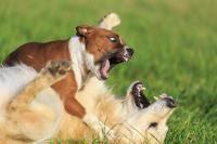 chien déteste les autres chiens
