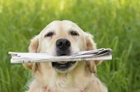 chien rapporte le journal
