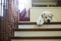 chien seul