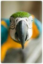 Choisir oiseau