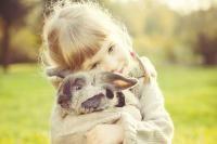 choisir un lapin