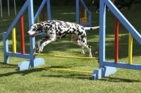 compétition canine