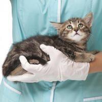 convalescence pour un chat