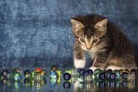 corps étranger chat