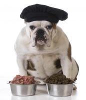 croquettes ou boite pour chien