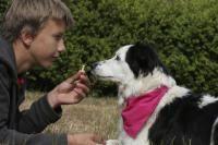 docilité du chien