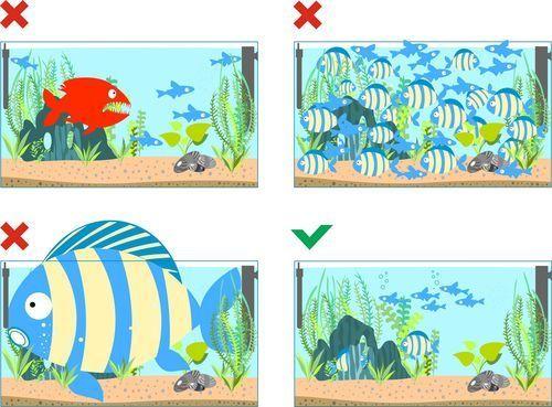 entretien de mon aquarium