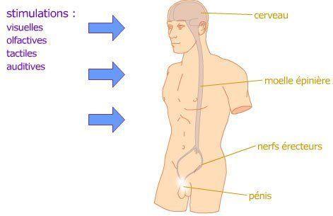 erecții nocturne lente cum să  ți bagi penisul