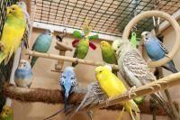 espèces d'oiseaux