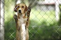 gardiennage chien vacances