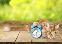 heure repas chat