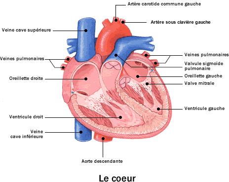 infarctus-crise cardiaque