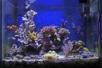 l'eau d'un aquarium