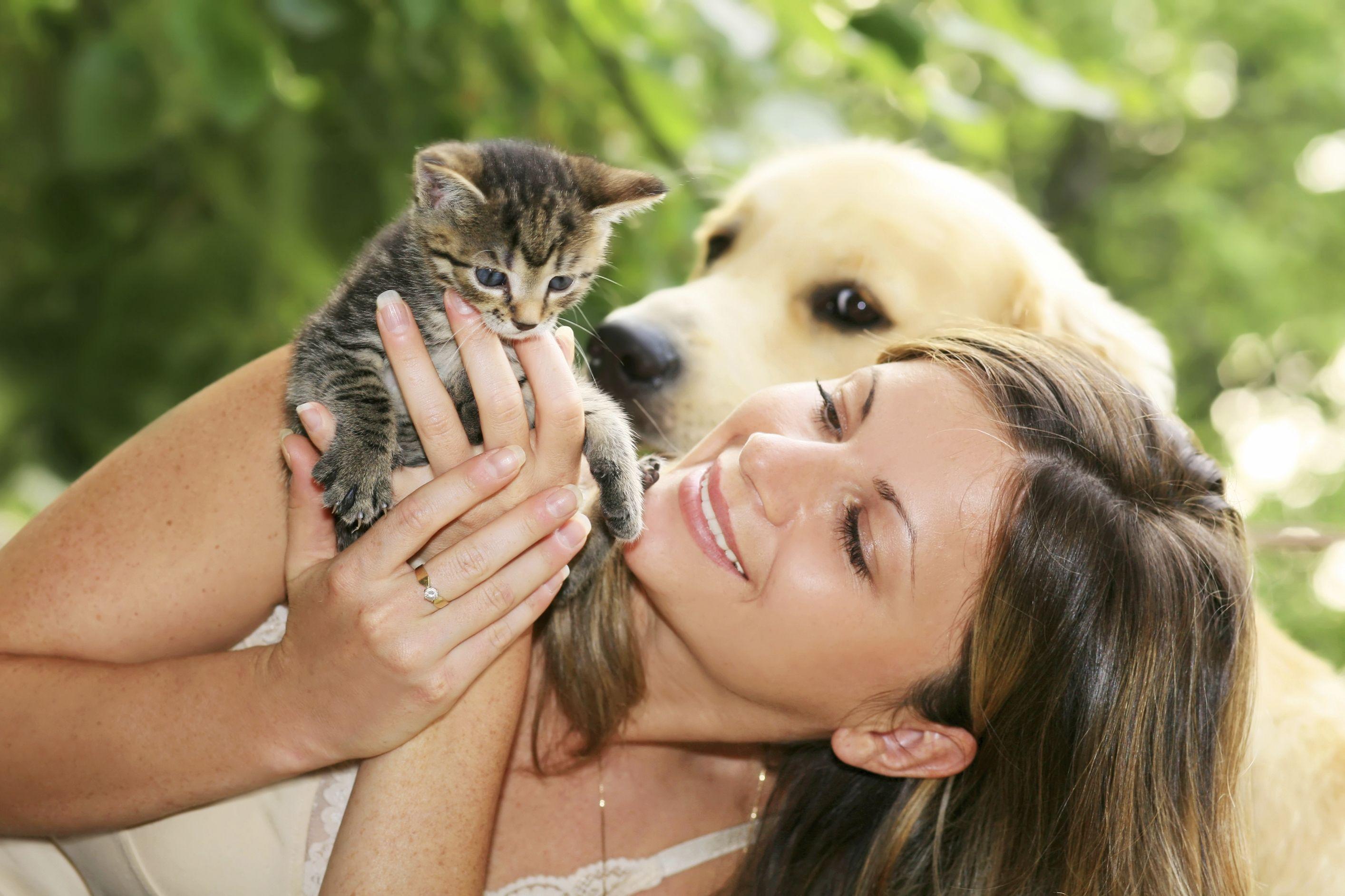 La cohabitation entre chat et chien