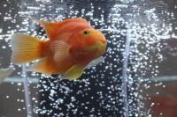 la filtration d'un aquarium